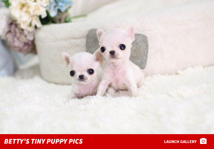 Paris Hiltons Teacup Dog Broker Accused Of Puppy Scam Tmzcom