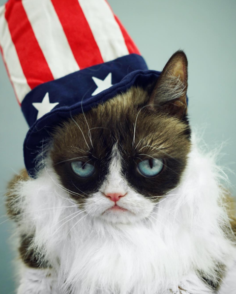 Grumpy Cat is not happy about the 4th of July