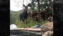 'South Park' Co-Creator Trey Parker and Family Get Super Close Moose Encounter