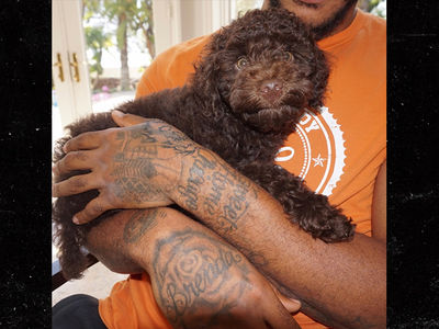 Derrick Rose Drops $4,600 On Adorable New Puppy