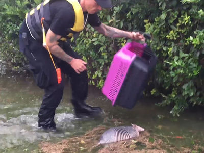 Hurricane Harvey Rescuers in Action Saving Dogs, Even an Armadillo