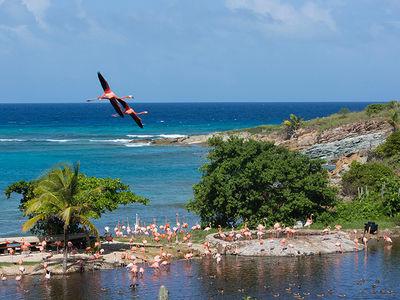 Richard Branson's Necker Island, Hundreds of Exotic Animals in Hurricane Irma's Path