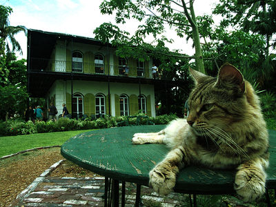 Hemingway House's Kitties are Safe After Hurricane Irma Spares Key West
