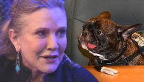 Carrie Fisher's Beloved Dog Gary Caught in Emotional Tug of War