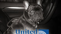 United Airlines Settles Lawsuit Over Dog That Died in Overhead Bin
