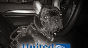 United Airlines Strikes Settlement Over Dog That Died in Overhead Bin