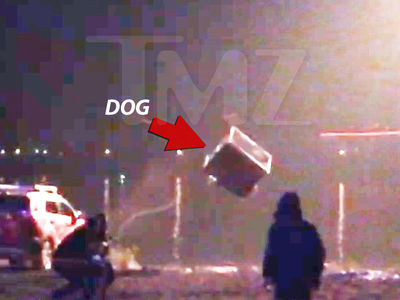 'Crazy Alien' Producers Say Dog Wasn't Supposed to Fall in Icy Water