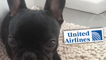Dog Killed on United Airlines Flight Died of Suffocation