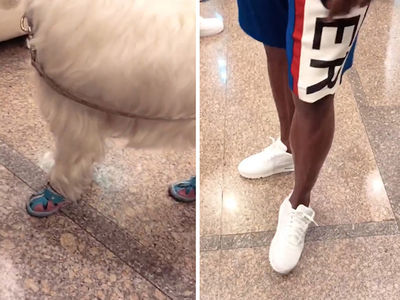 Floyd Mayweather Buys Designer Shoes for His Dog