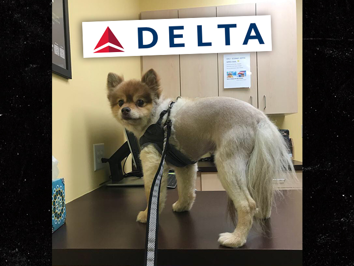Dog found dead on Delta flight after cross-country trip