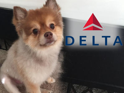 Owner of Dead Dog Claims Delta Air Lines Acted 'Suspicious'