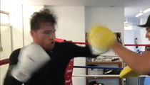 Canelo Alvarez Begins Training While De La Hoya Taunts GGG