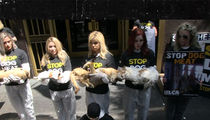 Kim Basinger and Priscilla Presley Use Dead Dogs to Protest Korea's Dog Meat Trade