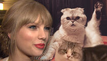 Taylor Swift Is Making Big Money Off Her Cats and Also 'Cats'