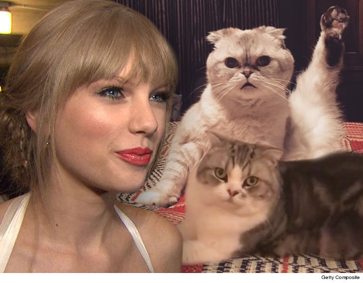 Taylor Swift Wants to Make a Buck Off Her Cats and 'Cats'