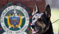 Colombian Drug Gang Puts $70k Hit on Cocaine Sniffing Dog