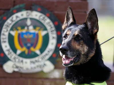 Colombian Drug Gang Puts $70k Hit on Cocaine Sniffing Dog