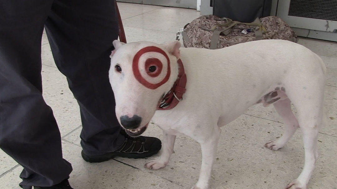de968ac35986 Bullseye the Target Dog Can't Relate to Cop Dog Taken Off Cocaine Beat