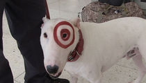 Bullseye the Target Dog Can't Relate to Cop Dog Taken Off Cocaine Beat