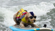 World Dog Surfing Championships Goes Down Near San Francisco