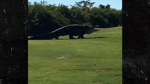 Famous Giant Gator Returns to Florida Golf Course, 'Hey Chubbs!'