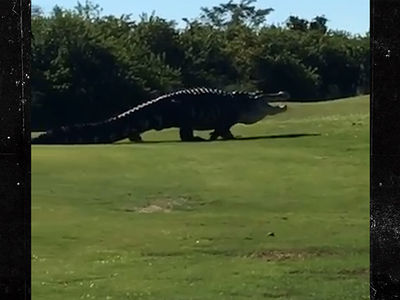 Famous Giant Gator Returns to Florida Golf Course, 'Hey, Chubbs!'