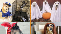 TMZ's Pet Costume Photo Gallery -- Scary Good!