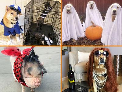 TMZ's Pet Costume Photo Gallery -- Scary Good!