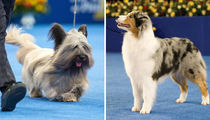 16 Fetching Best In Show Pups To Get You Ready For The National Dog Show