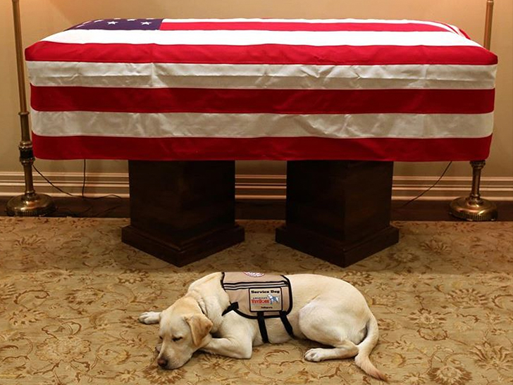 George H.W. Bush's Service Dog Stays By His Casket