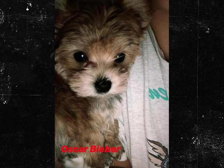 Justin And Hailey Bieber Add To The Family With Adorable Puppy Named