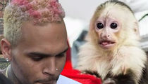 Chris Brown Says Monkey Charges Should Be Tossed, She's Not My Pet!