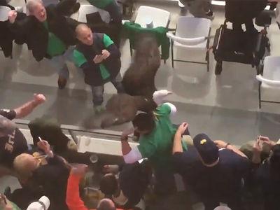 Bald Eagle Lands on Notre Dame Fan Ahead of Cotton Bowl Classic