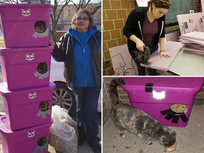 Chicago Polar Vortex Sparks Stray Cat Mission, Save 'em with Straw