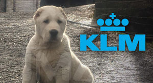 Family of Dead Dog Demands Answers from Air France-KLM