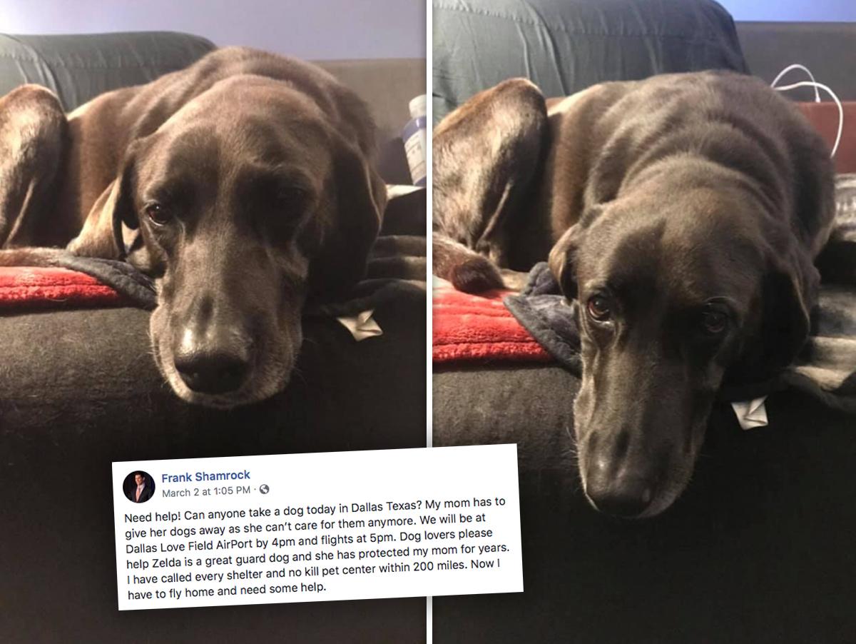 UFC's Frank Shamrock Tearful Apology ... For Abandoning Dog