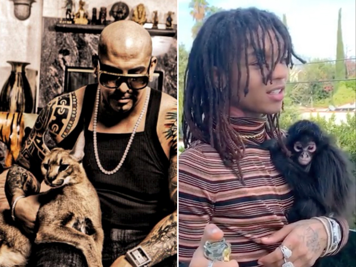 Mally Mall & Swae Lee Exotic Pets Won't Be Returned Serval Cat, Spider Monkey Finding New Homes