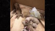 Puppy Dumped by Coachella Woman Dies