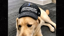 St. Louis Blues Give Team Puppy Stanley Cup Swag, Name On Cup Next?!