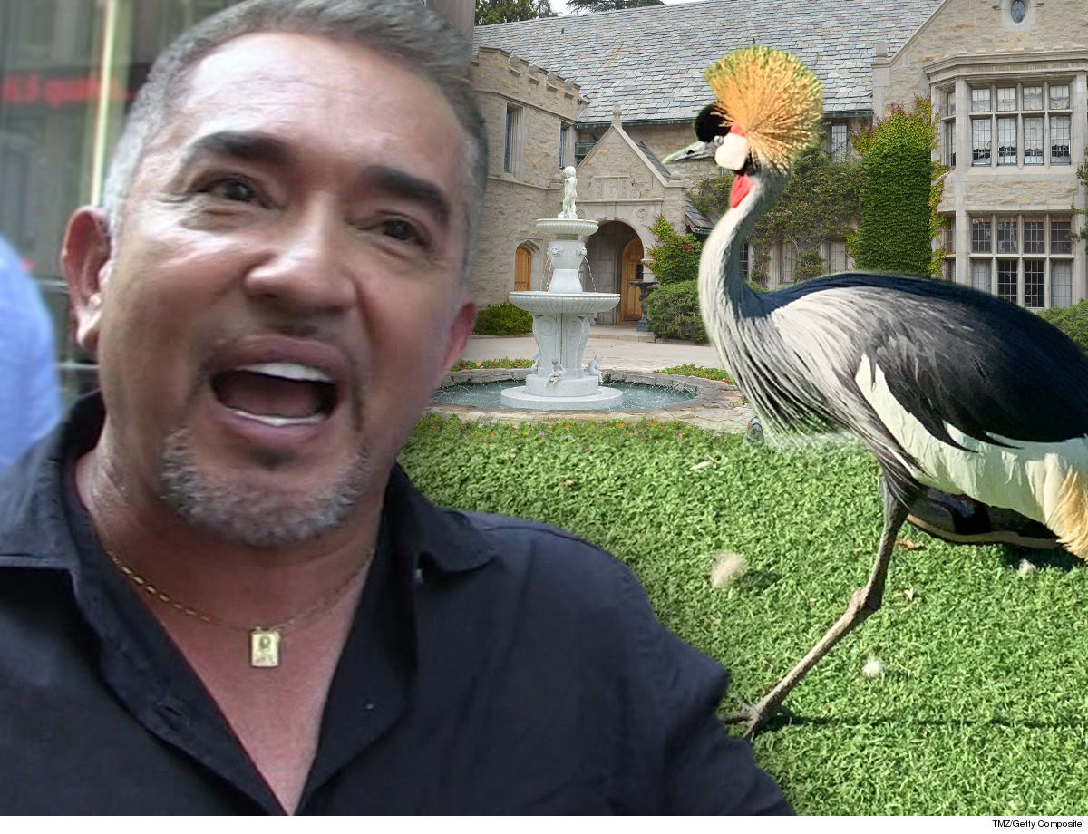Cesar Millan I'm Gonna Train a Pissy African Crane ... Living at the Playboy Mansion