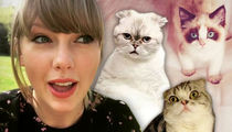 Taylor Swift Trademarks Her New Cat Benjamin Button