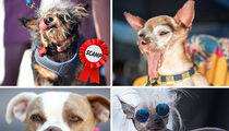 World's Ugliest Dog Crowned and Scamp the Tramp Becomes Scamp the Champ